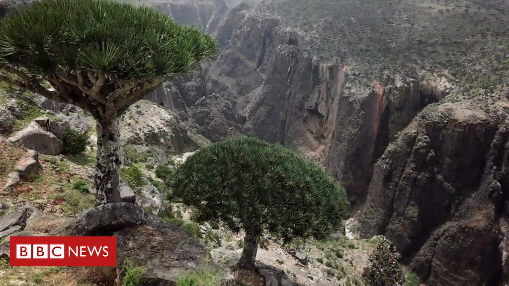 Yemen's Island 'Jewel' Under Threat