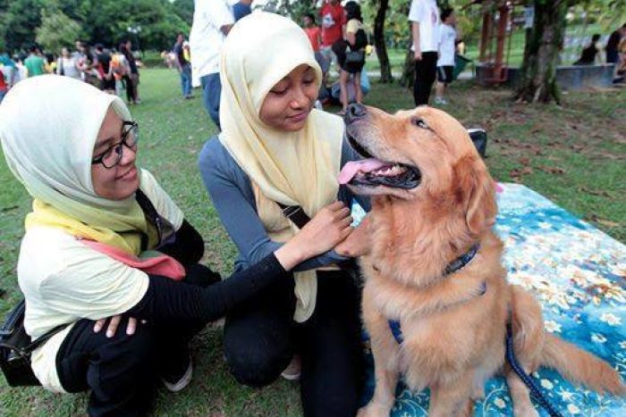 Is It OK to Pat a Dog? The Question at the Heart of a Dispute over Islamic Tradition