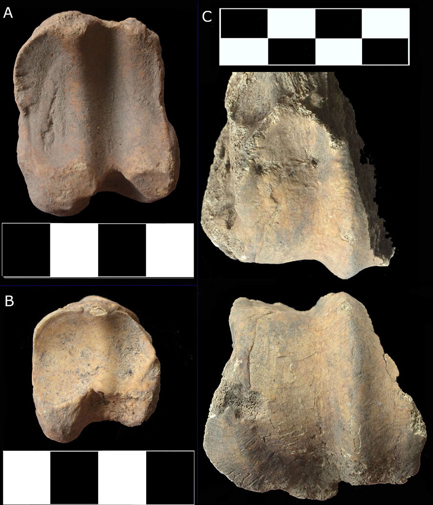 Early African Muslims Had a Halal -- and Cosmopolitan Diet -- Discovery of Thousands of Ancient Animal Bones Shows